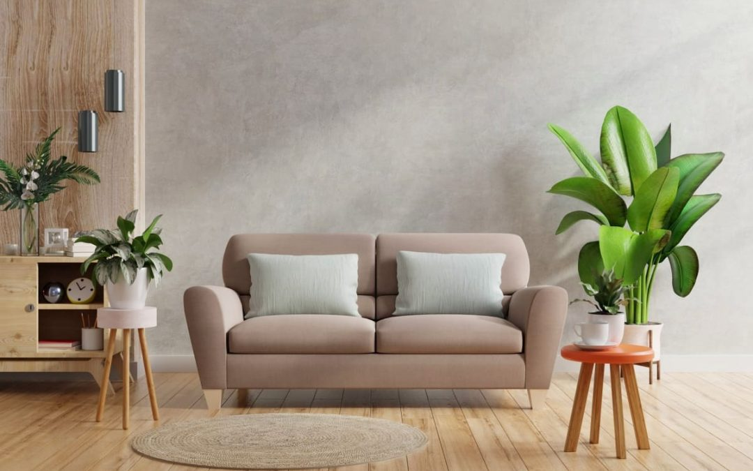 Las plantas en los hogares benefician nuestra salud